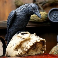 Ravens Remains - 13 cm